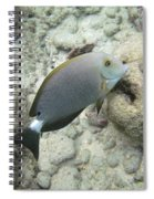Hawaiian Tropical Fish P1060093 Spiral Notebook