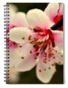 Hawthorn  Spiral Notebook