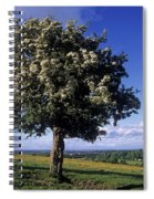 Hawthorn Tree On A Landscape, Ireland Spiral Notebook