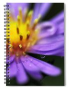 Hazy Daisy... With Droplets Spiral Notebook