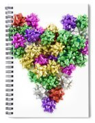 Heart Shaped Christmas Bows  Spiral Notebook