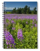 Hedge Woundwort Flower Blossoms And Field Spiral Notebook