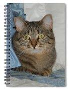 Heidi Cat Miss You Spiral Notebook