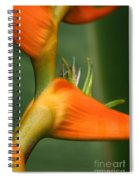 Heliconia Latispatha Spiral Notebook