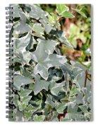 Helix Glacier Ivy Spiral Notebook
