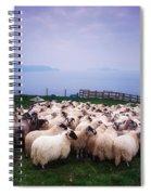 Herding Sheep, Inishtooskert, Blasket Spiral Notebook