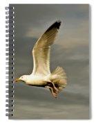 Herring Gull Larus Argentatus Spiral Notebook