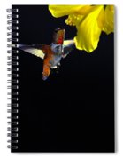 Hibiscus Hummer On Black Spiral Notebook