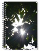 Hickory Triple Stars Spiral Notebook
