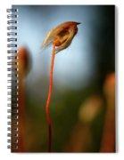 Hippie Spiral Notebook