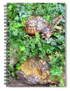 Hitchin A Ride On A Turtle  Spiral Notebook