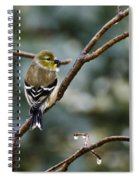Ho Hum Bird In An Ice Storm Spiral Notebook