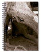 Hollow Tree Spiral Notebook