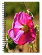 Hollyhock 7189 Spiral Notebook