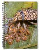 Homopteran Insect Spiral Notebook