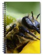 Honey Bee 2 Spiral Notebook