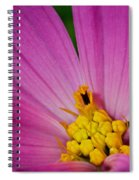 Honey Bee's Candy Dish Spiral Notebook