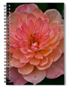 Honey Bunch Spiral Notebook
