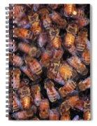 Honey Honey Spiral Notebook
