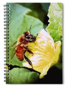 Honeybee And Cantalope Spiral Notebook