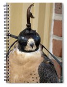 Hooded Barbary Falcon Spiral Notebook