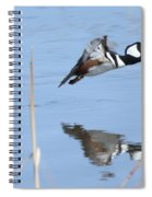 Hooded Merganser Flying Spiral Notebook