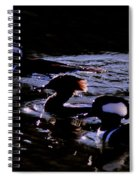Hooded Mergansers And Moon Glare Spiral Notebook