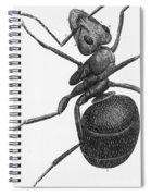 Hooke: Ant, 1665 Spiral Notebook