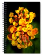 Horn Section Spiral Notebook