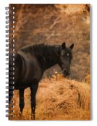 Horse And The Haystack Spiral Notebook