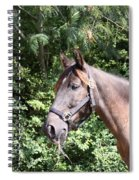 Horse At Mule Day In Benson Spiral Notebook