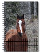 Horse Behind The Fence Spiral Notebook