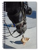 Horse Feathers Spiral Notebook