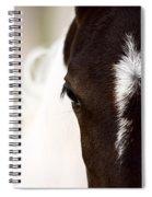 Horse Mare Saskatchewan Field Spiral Notebook