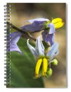 Horse Nettle Nightshade - Solanum Carolinense Spiral Notebook