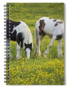 Horses Grazing, County Tyrone, Ireland Spiral Notebook