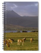 Horses Grazing, Macgillycuddys Reeks Spiral Notebook