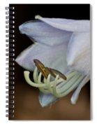 Hosta Blossom 1 Spiral Notebook