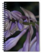 Hosta Blossoms With Dew Drops Spiral Notebook