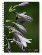 Hosta Flowers Spiral Notebook