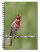 House Finch - Content Spiral Notebook