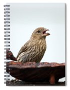 House Finch Eating Jelly Spiral Notebook