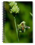 Hoverfly On Grass Spiral Notebook