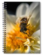 Hoverfly On White Flower Spiral Notebook
