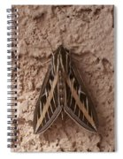 Huge Moth On Stucco In Las Vegas Spiral Notebook