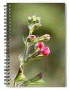 Hummer Food Spiral Notebook