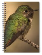 Humming Bird On Branch Spiral Notebook