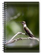 Hummingbird - Bird Spiral Notebook