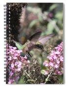 Hummingbird - Ruby-throated Hummingbird - Chopper Spiral Notebook