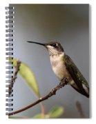 Hummingbird - Ruby-throated Hummingbird - Near The End Spiral Notebook